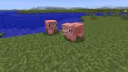 Свинья: описание, ID, скриншоты и др.